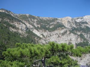 Сосна на фоне горных великанов