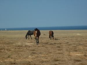 Лошади из Тарханкута