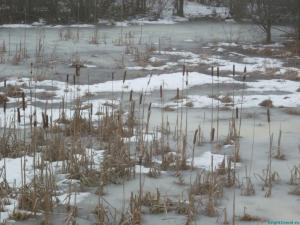 Камыши во льду