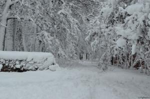 Деревья под снежным покрывалом