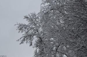 Красота укрытых снегом деревьев