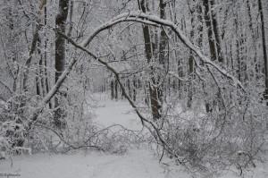 Дерево не выдержавшее давление снега