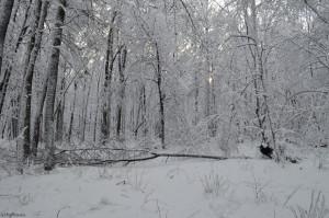 Дерево упало под давлением снега