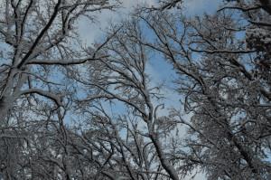 Заснеженные верхушки деревьев