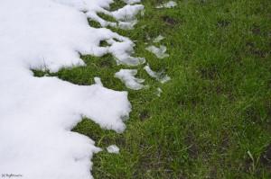 Ярко-зеленая трава и снег