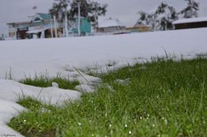 Трава в росе и снег