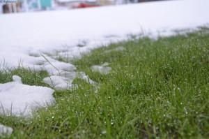 Красивая трава и снег