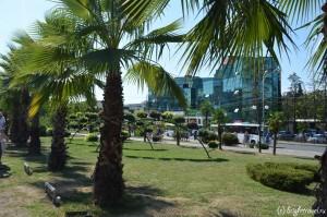 Аллея пальм у вокзала города Сочи
