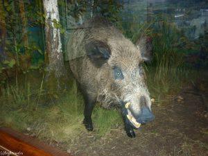 Экспонат кабана