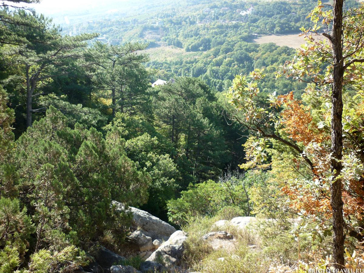 Фото горного лесного массива
