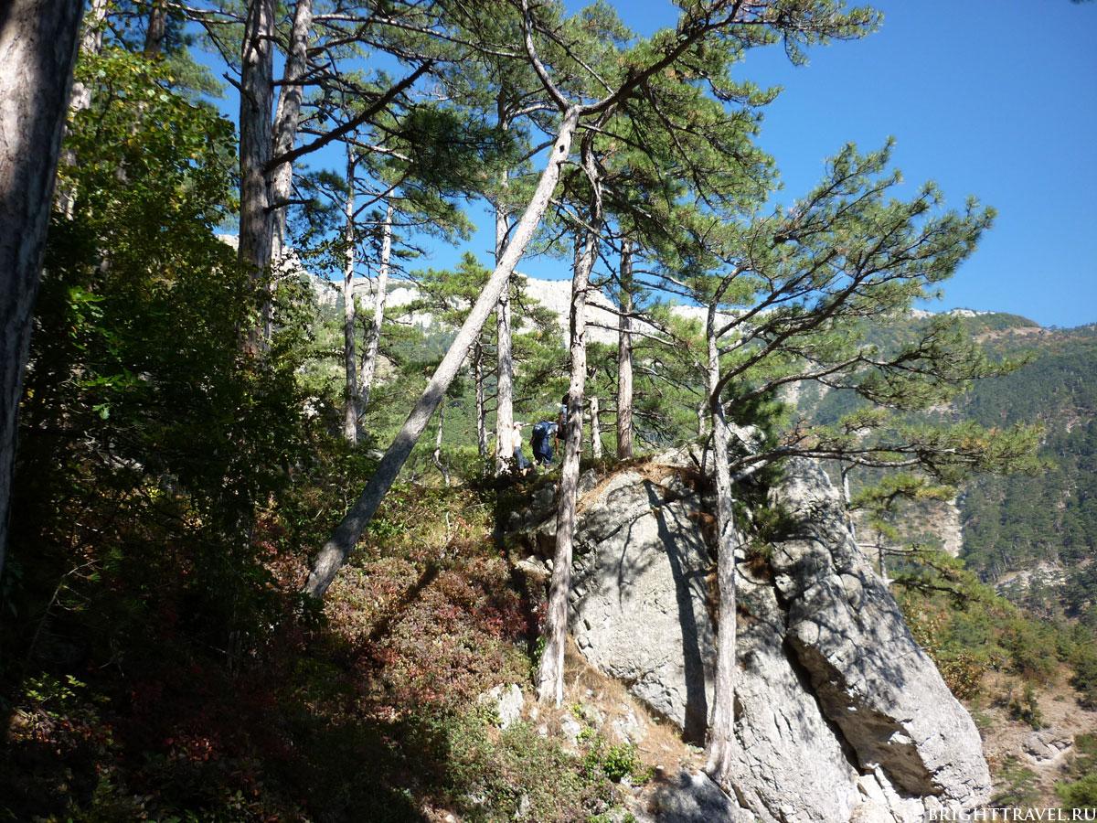 Сосны в горах вблизи Ялты